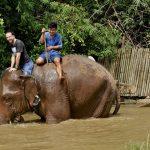 Il danse avec les éléphants
