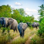 Au coeur de la savane africaine