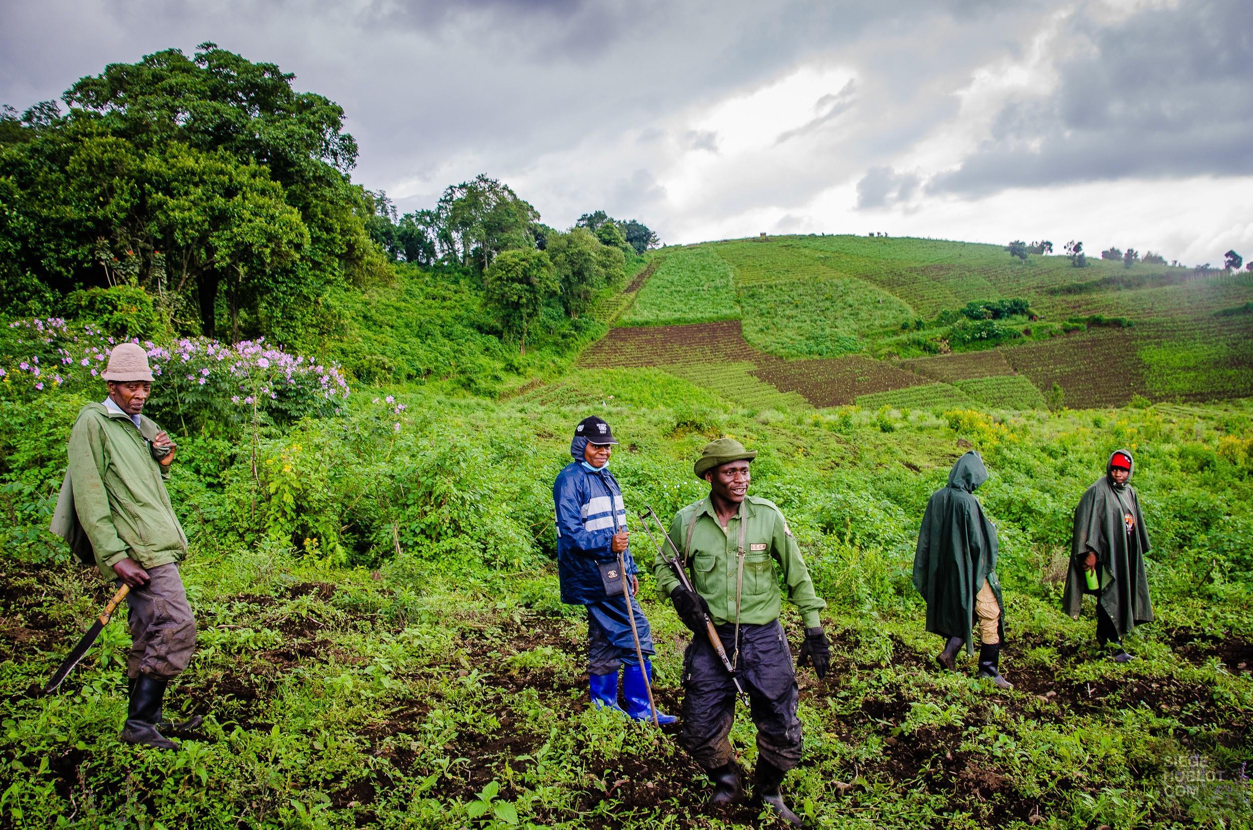 Aux pays des gorilles, le Congo et le Rwanda - rwanda, destinations, congo, afrique, a-faire