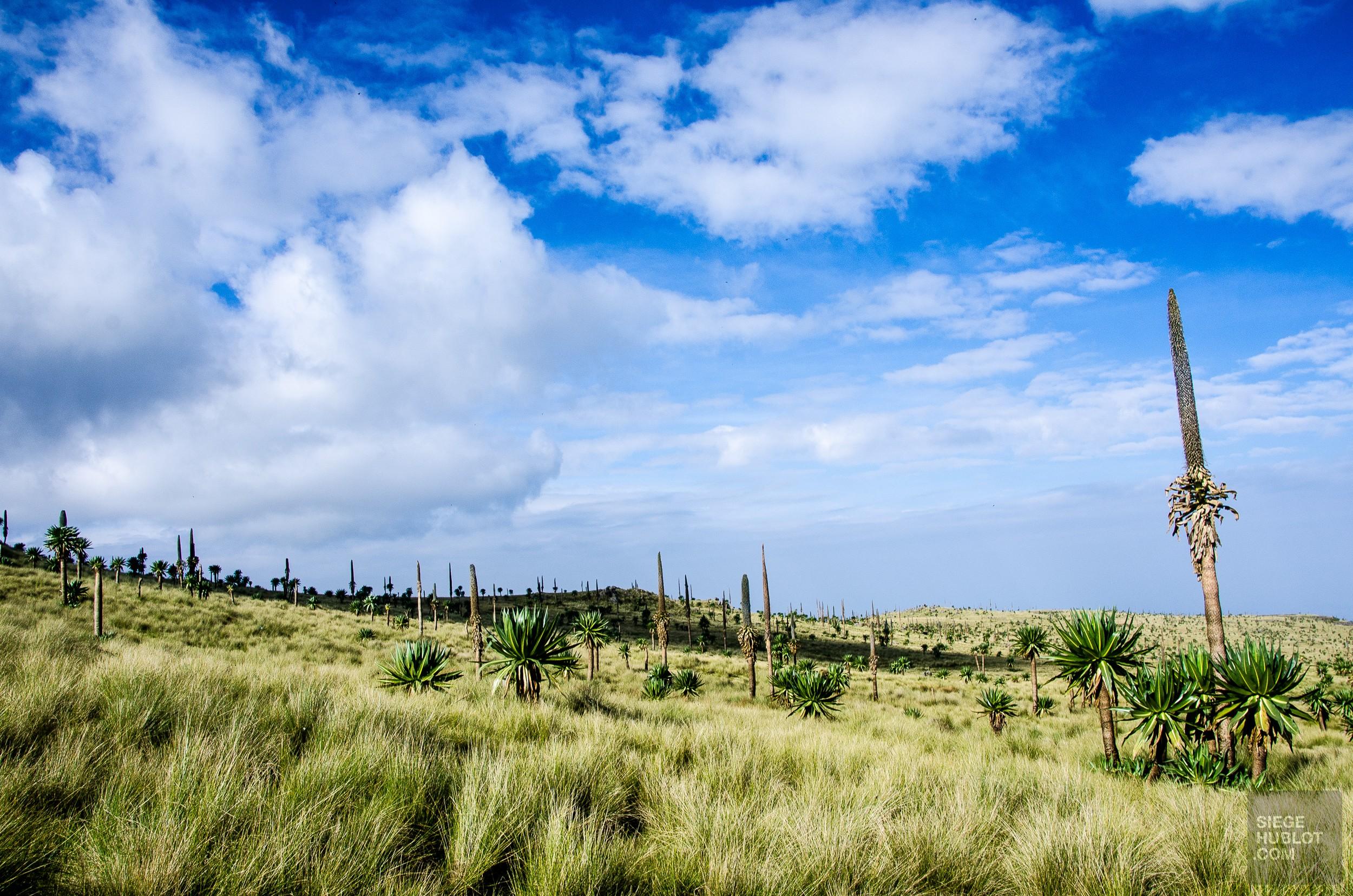 paysage - des babouins dans les nuages monts simien ethiopie - Des babouins dans les nuages Monts Simien Ethiopie - afrique, ethiopie
