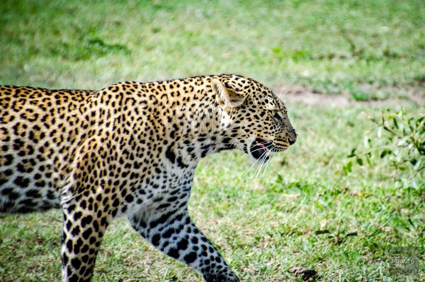 Faire un safari comme Barack Obama - kenya, destinations, afrique