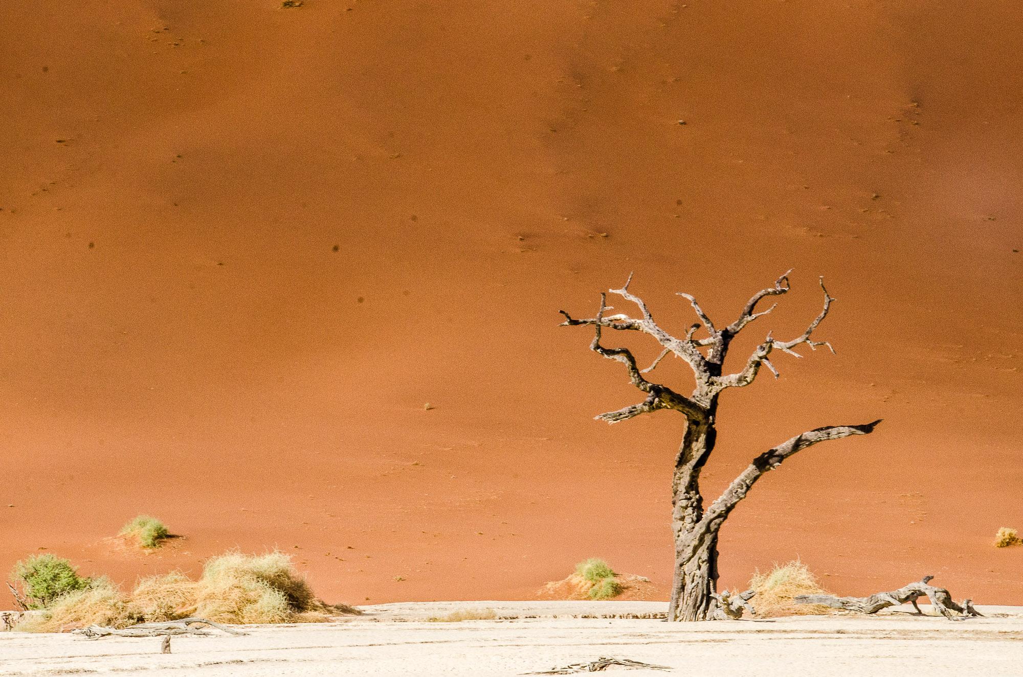 arbre petrifie dune 2 - deadvlei - le desert du namibie - afrique, namibie