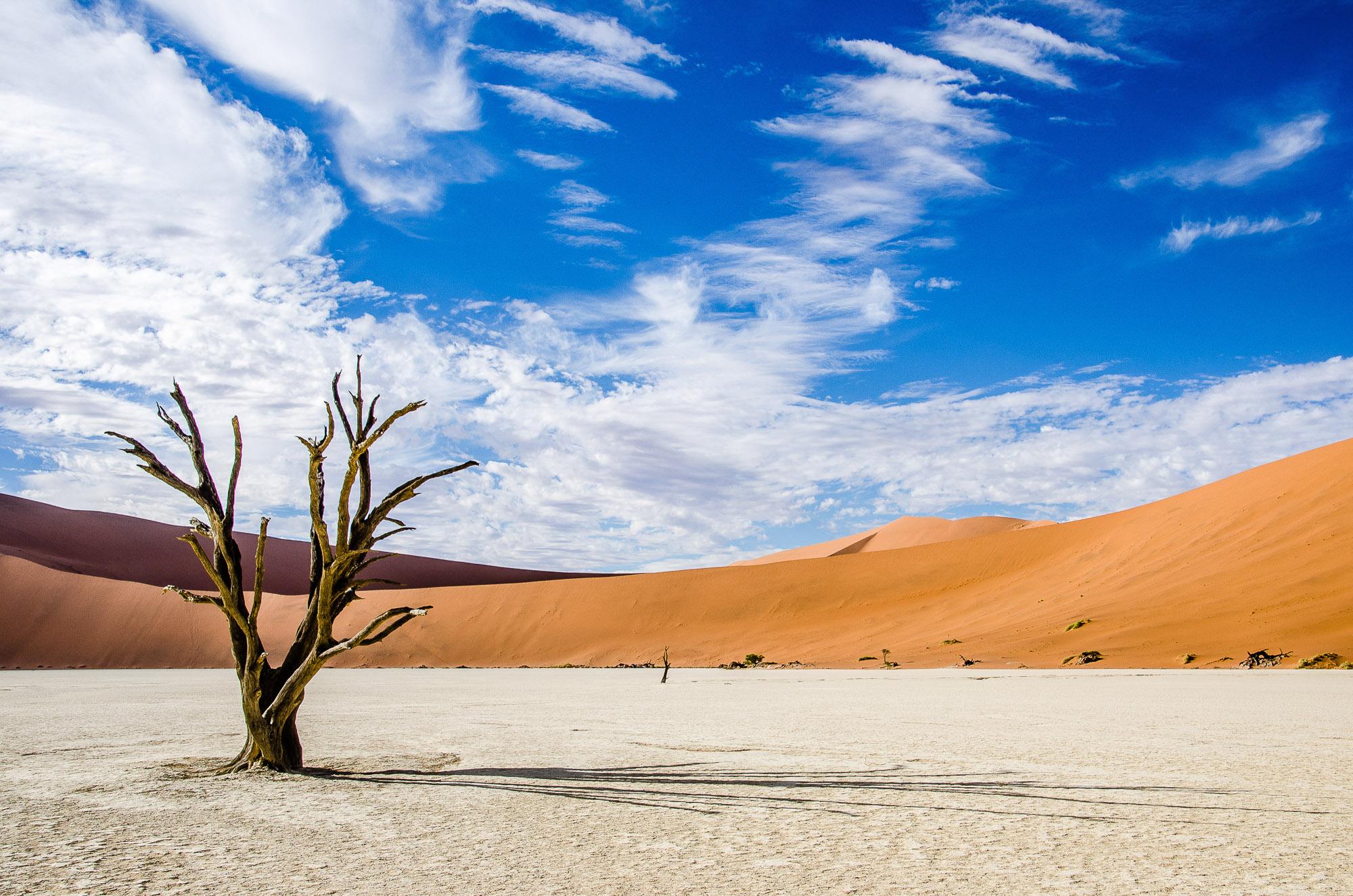 arbre petrifie dune ciel bleu 2 - deadvlei - le desert du namibie - afrique, namibie