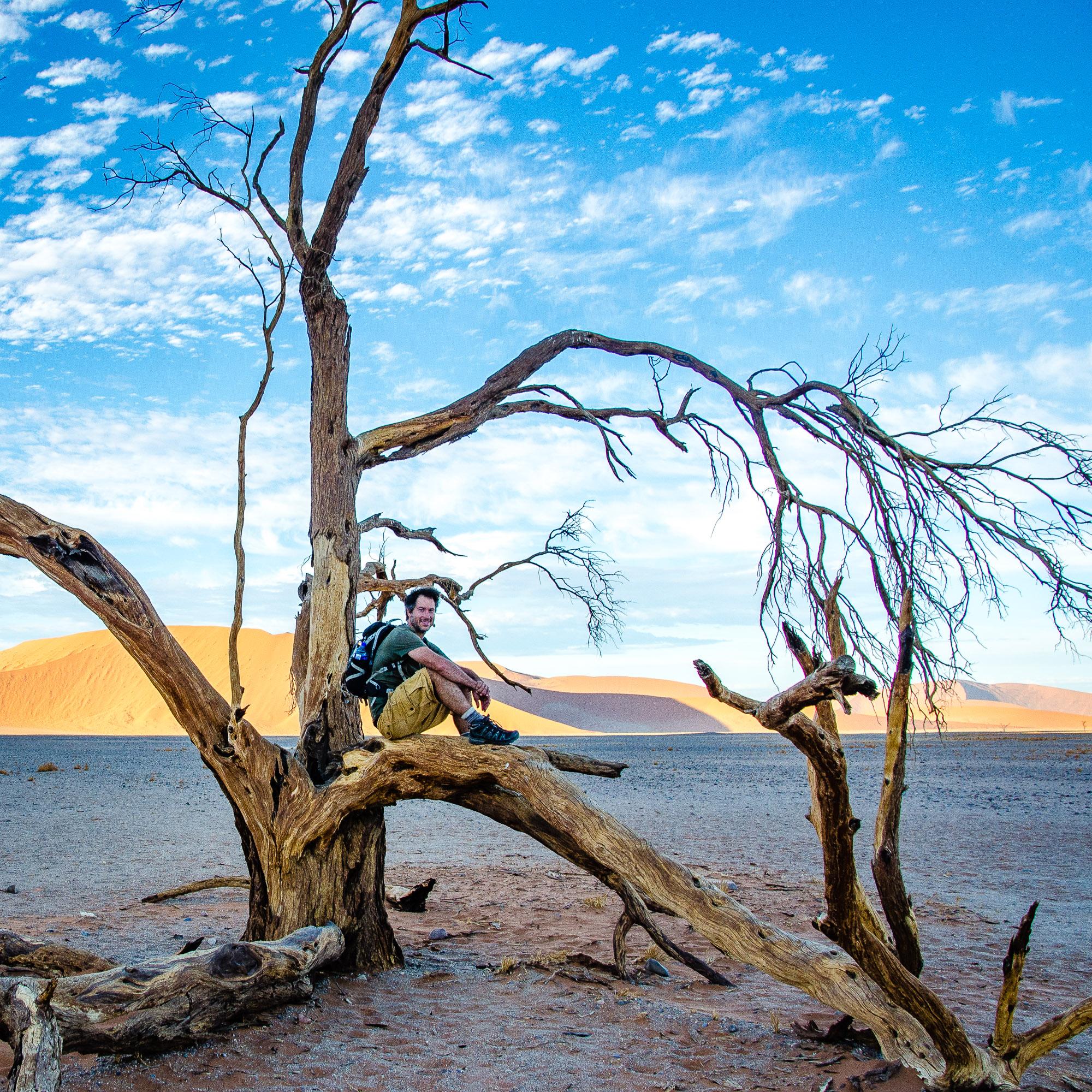arbre repos panorama - deadvlei - le desert du namibie - afrique, namibie