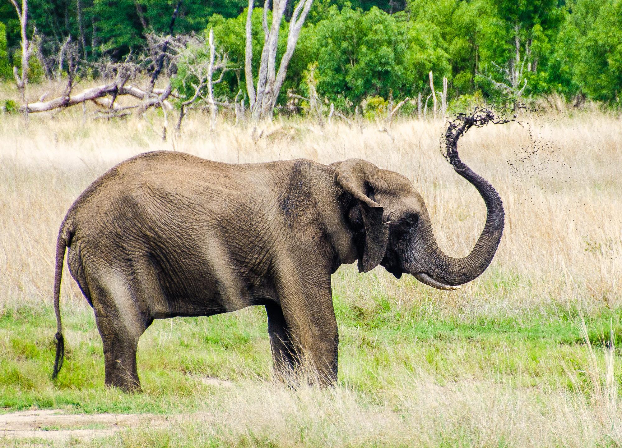 elephant - parc national de hwange - Zimbabwe, les chutes Victoria et plus encore! - afrique, zimbabwe