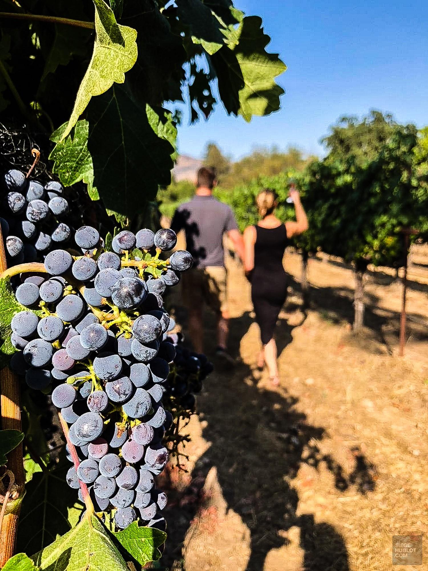 Raisins vignoble - Coup de coeur a Napa Valley - Ameriques, Etats-Unis